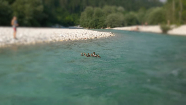Keep Soča cool